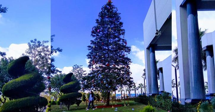 طلاب بجامعة «MUST» يلتقطون صورا تذكارية بجوار شجرة الكريسماس