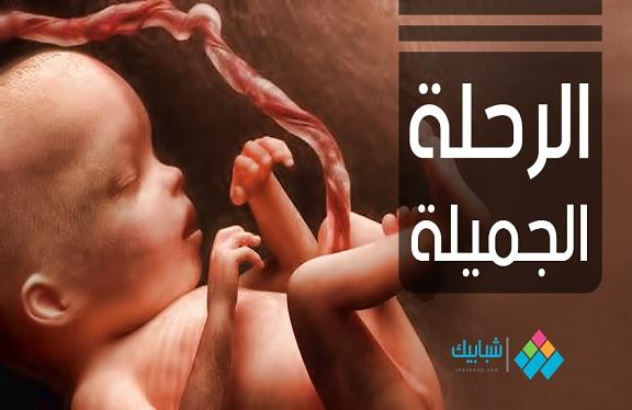 فيديو| «الرحلة الجميلة» حياة الجنين داخل رحم الأم