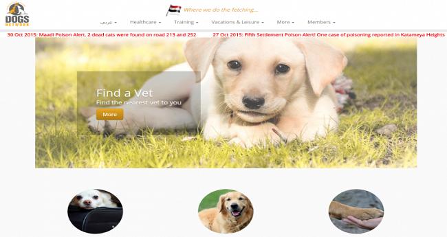«دلع كلبك» مع «Dog Network»