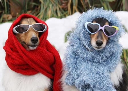 3 خطوات لحماية الكلاب والقطط من أمراض الشتاء
