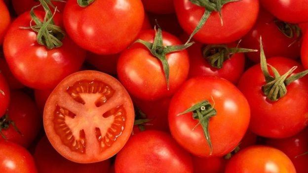 الإمارات تستخدم تكنولوجيا حديثة لزراعة الطماطم.. كيف تفيدها؟
