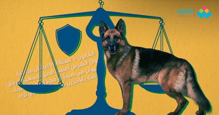 طريقة التعامل مع هجوم وعضة «الكلب العقور».. يموت بسببه 10 آلاف شخص سنويا
