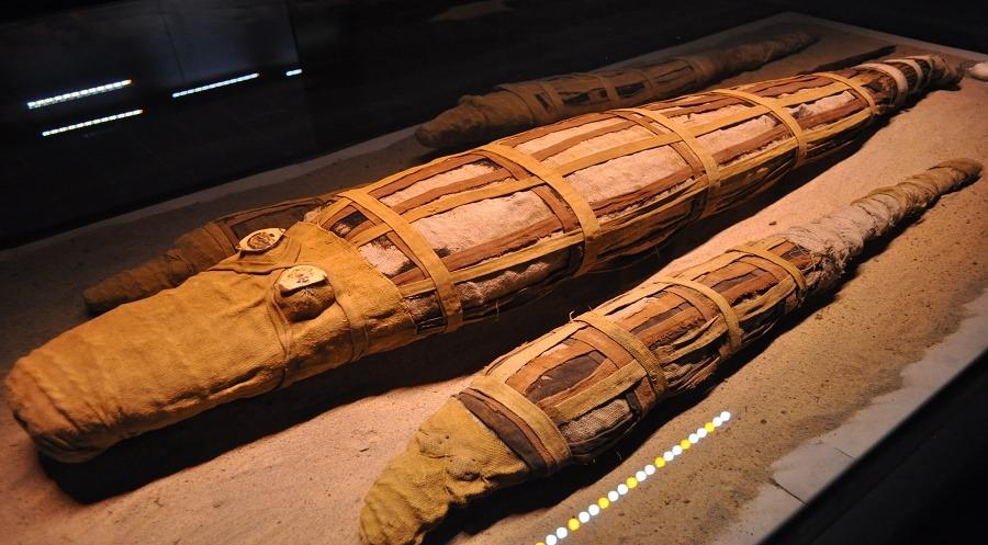 http://shbabbek.com/upload/متحف التحنيط.. بوابتك الأولى لسر الفراعنة الأعظم من الأقصر
