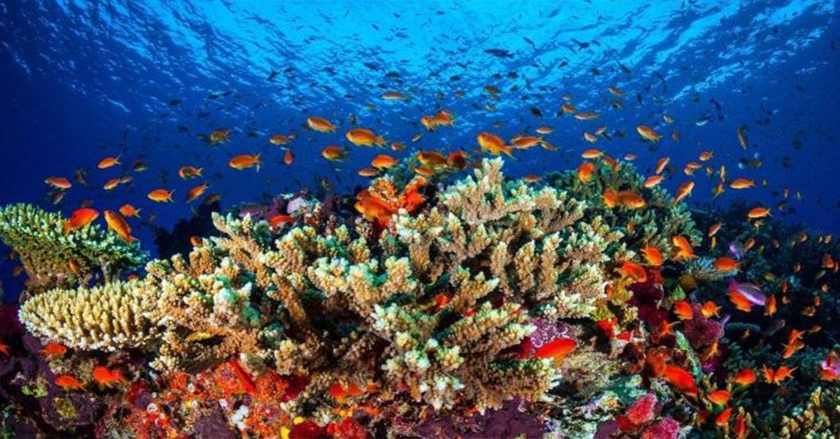 التعليم العالي توقع بروتوكول تعاون لإعادة تأهيل واستزراع الشُعاب المرجانية