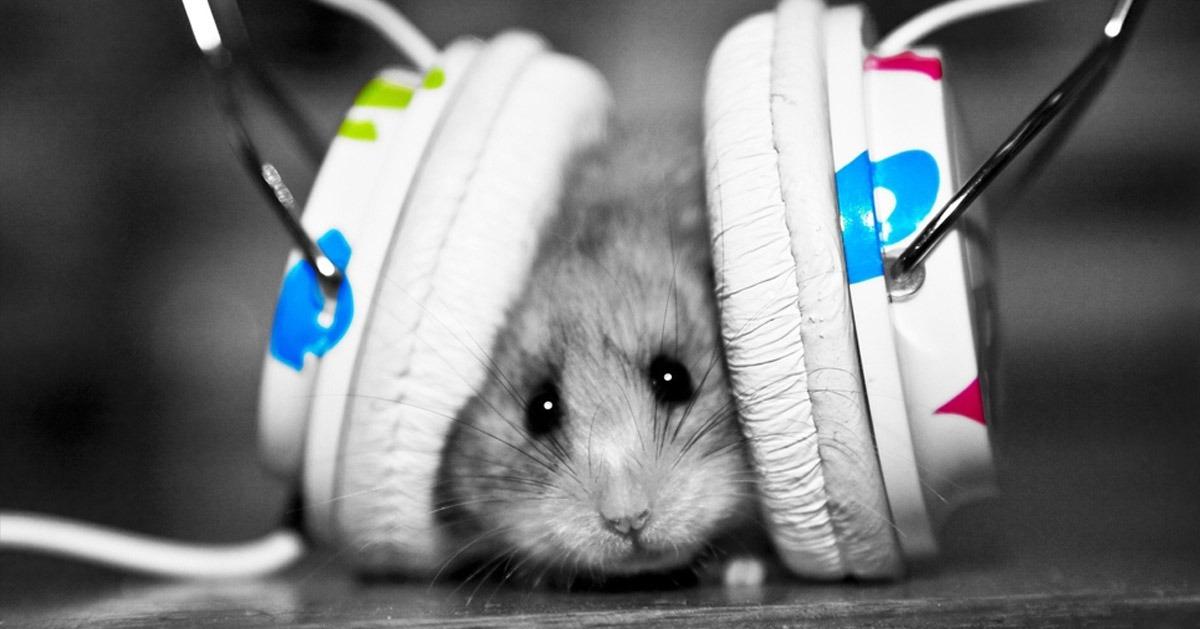 سر الموسيقى.. كيف تصل الأنغام الجميلة إلى المخ؟