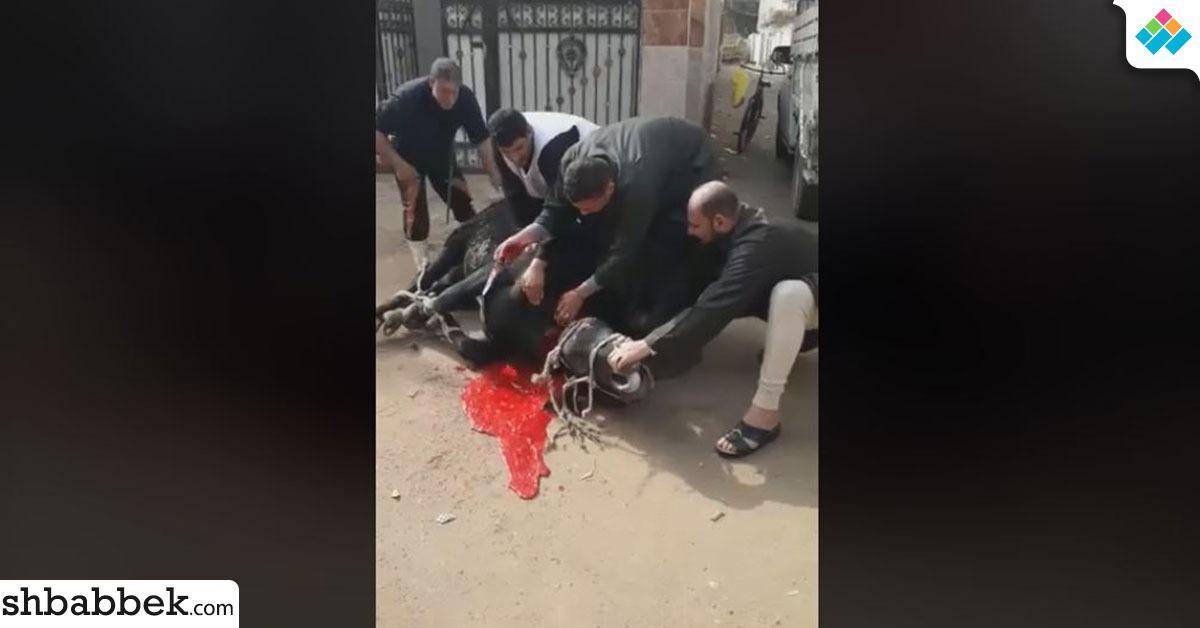 http://shbabbek.com/upload/لمواجهة الغلاء.. شباب قرية بالشرقية يبيعون لحم بلدي بأسعار رمزية (فيديو)