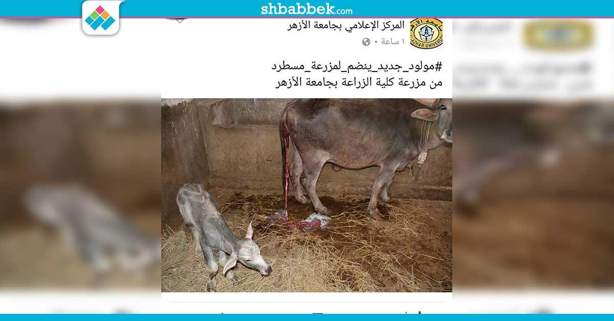 http://shbabbek.com/upload/جامعة الأزهر تحتفل بمولود جديد في مزرعة مسطرد