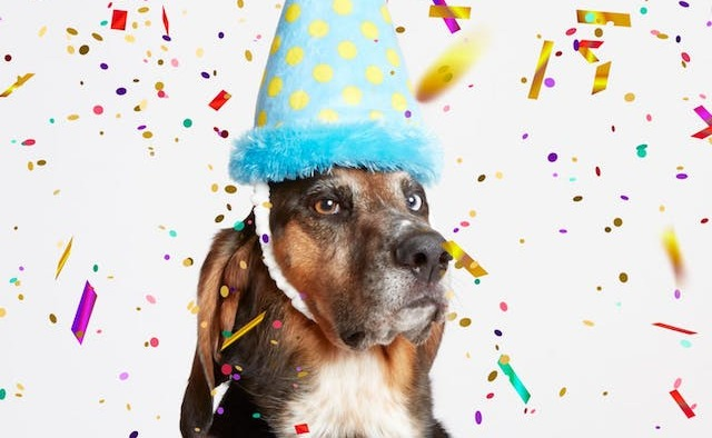 ممثل مصري يحتفل بعيد ميلاد كلبته بالتورتة والشموع (صور)