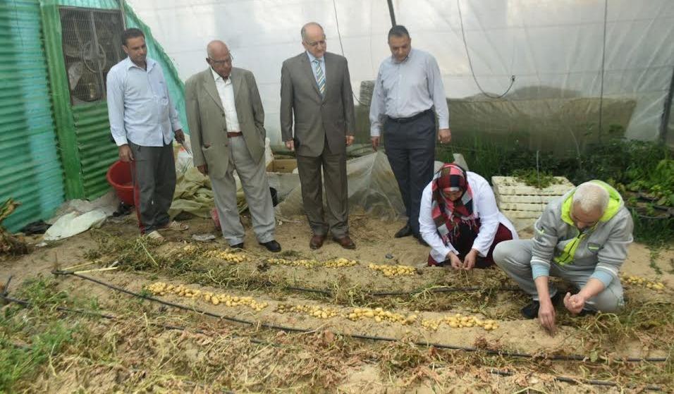 جامعة السادات تنجح في إنتاج تقاوي البطاطس باستخدام تقنيات زراعة الأنسجة النباتية