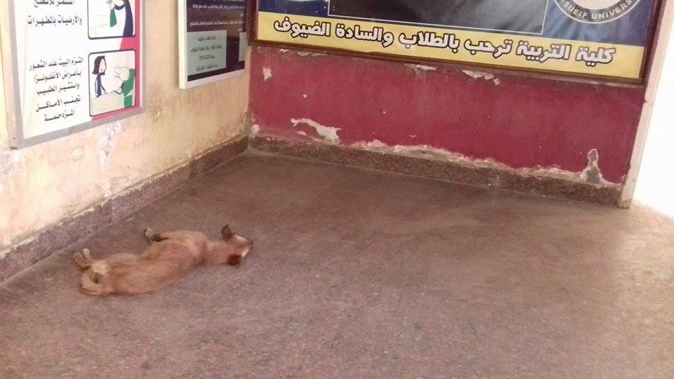 صور| انتشار عدد من الكلاب والقطط بمدخل كلية التربية جامعة بني سويف