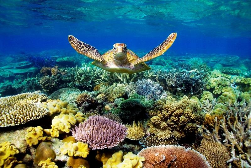 underwater-art-gallery-great-barrier-reef